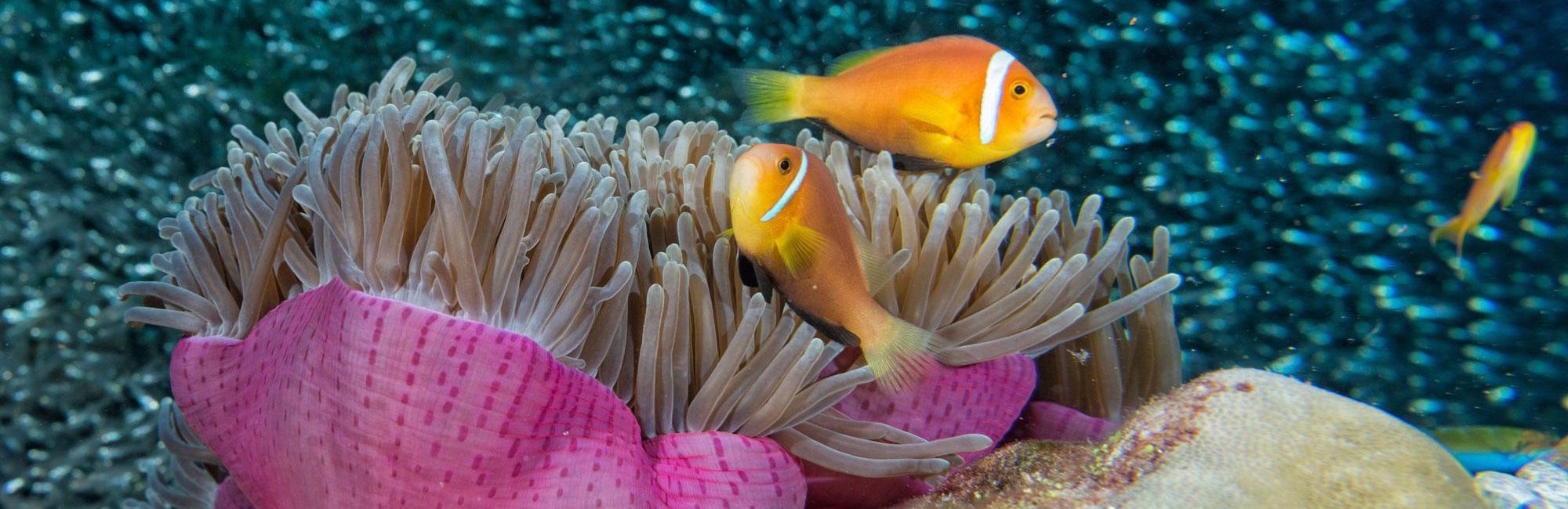 SEO - Digital Marketing - Coral Images